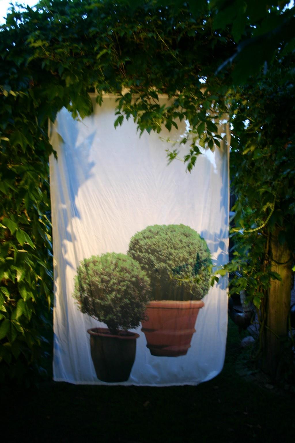 Buchsbaumvorhang